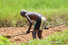 Man working in the field